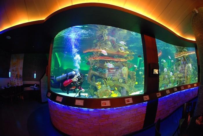 Fish Tanks 1