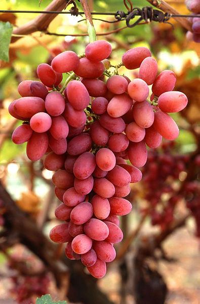 395px-Grapes05