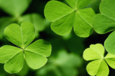 The St. Patrick's Day Weekender