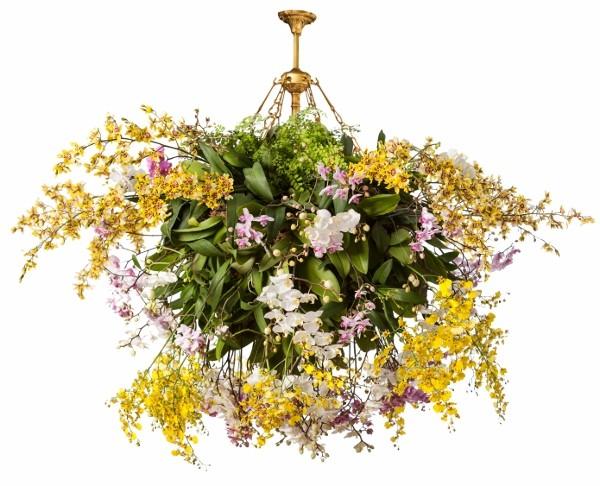 New York Botanical Garden - Orchid Show - La Placa Cohen