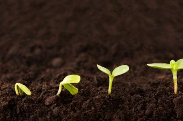 Perseus Grows Brazilian Footprint